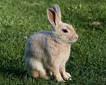 Rabbit Host Antibodies and Antigens